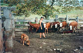 Deb with Jeff's cows