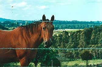 Rusty the horse